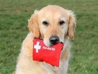 Аптечка для вашего пёсика
