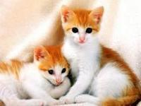 Самые любимые домашние животные россиян — кошки