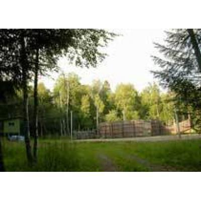 В Ивановской области за незаконную рубку леса к уголовной ответственности привлечены 16 человек