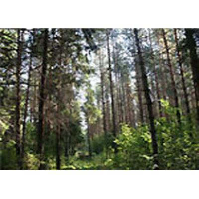 За 9 месяцев от использования лесных ресурсов Пермского края в региональный бюджет поступило 142 млн рублей