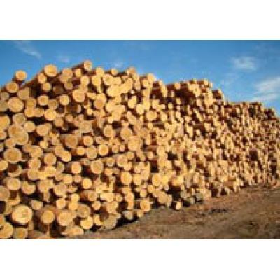 Путин: Россия скоро повысит экспортные пошлины на круглый лес