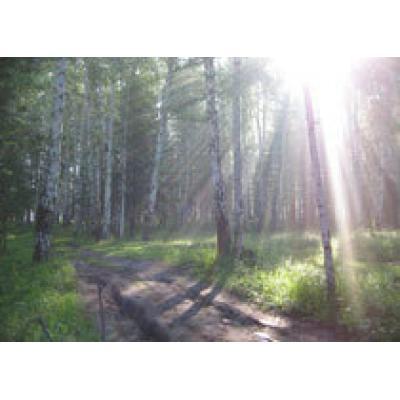 Лесной совет СНГ пройдет в Минске