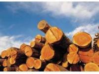 Роль древесины в промышленном производстве