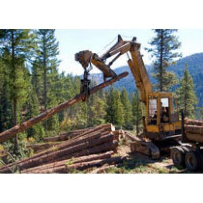 За три года вывоз необработанной древесины из России сократился в 2,5 раза