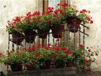 Оформление балконов домашними комнатными растениями