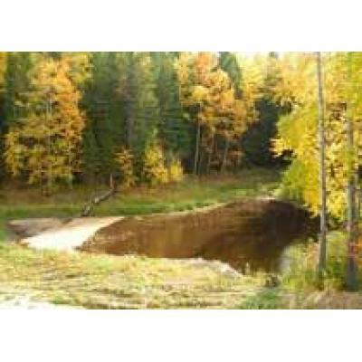 В Югре резюмировали итоги деятельности лесопромышленного комплекса за 2002-2010 годы