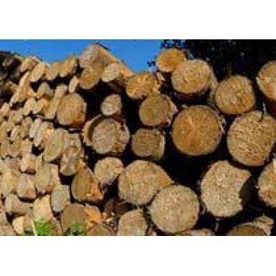 На поддержку лесной отрасли будет выделено 1,3 миллиарда рублей
