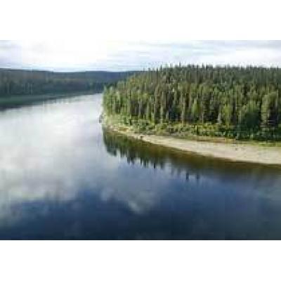 Путин обсудит реализацию инвестпроектов в лесопромышленном комплексе