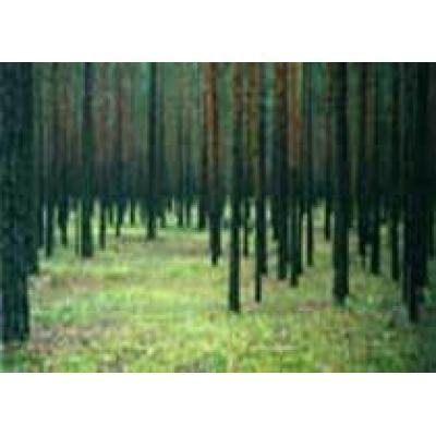 Развитие лесопромышленного комплекса станет одной из главных тем Байкальского экономического форума