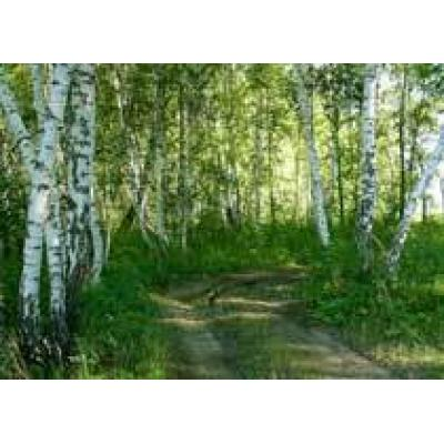 Компании «АВА компании» предоставили в аренду три лесных участка в Омской области под заготовку древесины