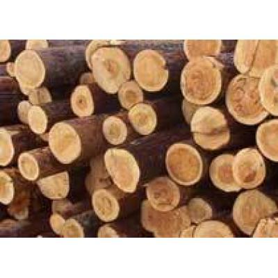 Круглый лес из России будут вывозить по ставкам 2010 года