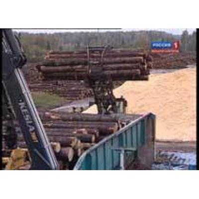 В 2010 году удалось увеличить объем лесозаготовок на 250 тыс. куб.