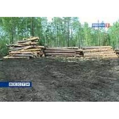 Действие пониженных пошлин на лес - кругляк продлено на 2011 год