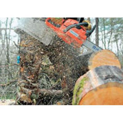В Югре упростили порядок заготовки древесины для строительства домов