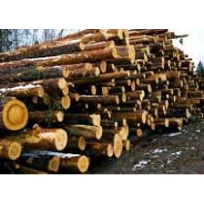 Хабаровские власти призвали китайцев инвестировать в деревопереработку в регионе