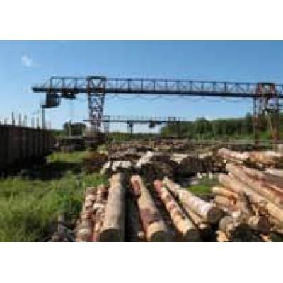 Пермские лесопромышленники пожаловались Путину на железнодорожников