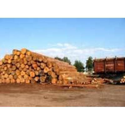 Красноярское минприроды приступило к созданию сети пунктов отгрузки древесины