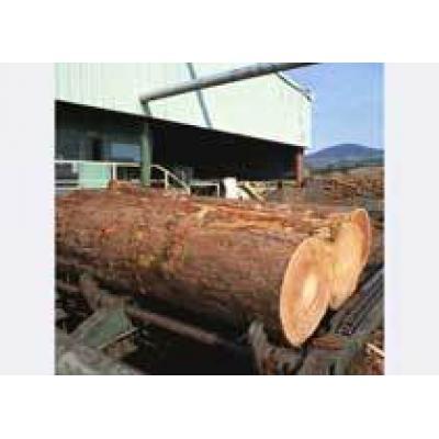 Переработки древесины в России может увеличиться до 78,5 %