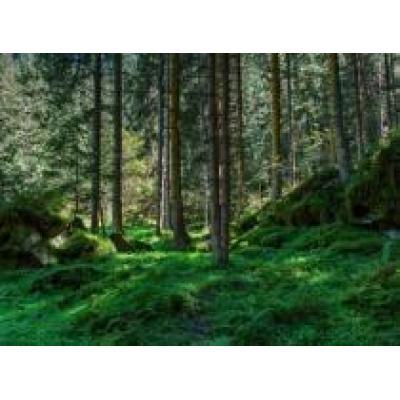 На «Лесдревмаше» обсудили проблемы нехватки древесного сырья в России