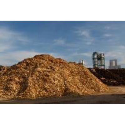 Эксперты поддерживает инициативу Правительства РФ по организации биржевой торговли лесоматериалами