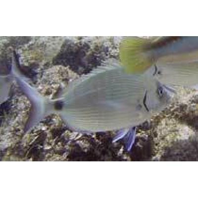 Тель-Авив атакуют голодные рыбы