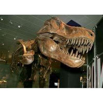 Нью-Йорк: ночные забавы в обществе динозавров