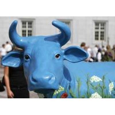 Синие коровы привлекут туристов в Латвию