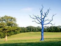Раскрашенные деревья – достопримечательность Уэльса
