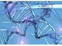 Новый генетический тест позволит прогнозировать степень риска нейробластомы у новорожденных