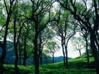 В Индии гора ушла под землю