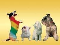 В Австрии устроят пивной праздник для собак