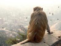 Аэропорт Дели закрыли из-за обезьяны