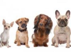 Роял Канин для собак мелких пород
