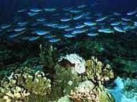 Жизнь не могла возникнуть в океане, утверждает российский ученый