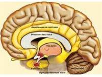 Аллергические реакции защищают от рака мозга