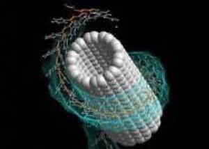 Генная инженерия – ключ к бессмертию