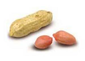 Лечебные свойства арахиса