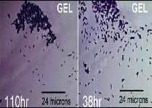 Химики привили неорганике органические свойства