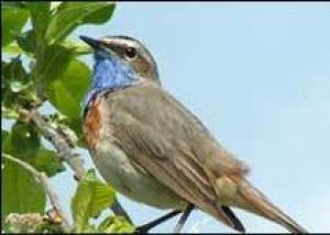 Ученые выяснят, как пение птиц влияет на человека