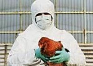 В Ростовской области обнаружен птичий грипп