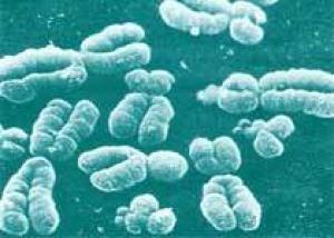 Ученые починили ломкую хромосому