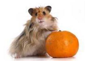 Полезный яркий мандарин