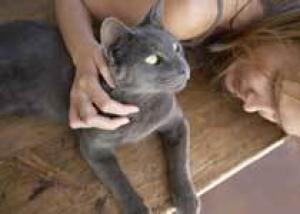 Кошки защищают от инфаркта