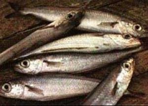 Волшебные свойства рыбы
