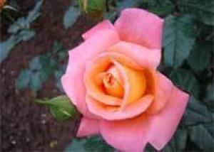 Памятный цветок