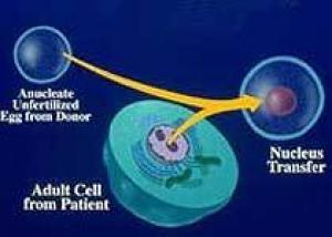 Паркинсонизм у мышей вылечили с помощью терапевтического клонирования