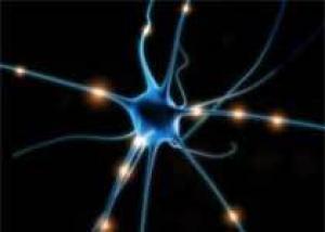 Нейроны лечатся слиянием