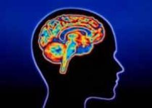 В мозге обнаружена зона корысти и честолюбия