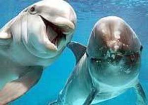 В Крыму дельфины исцеляют больных