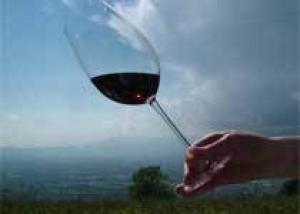 Большие дозы самого полезного компонента красного вина, ресвератрола, защищают организм от многих признаков старения